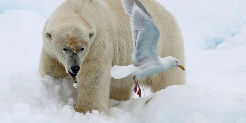 Recent travels in the arctic, Jim Wilson