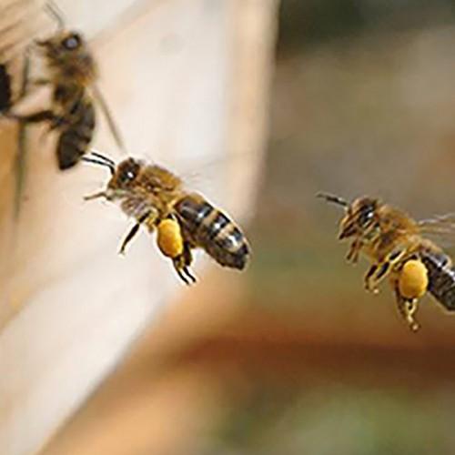 Bee Talk